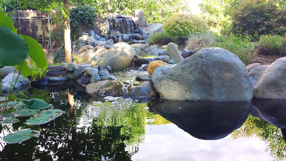 Complete Ponds