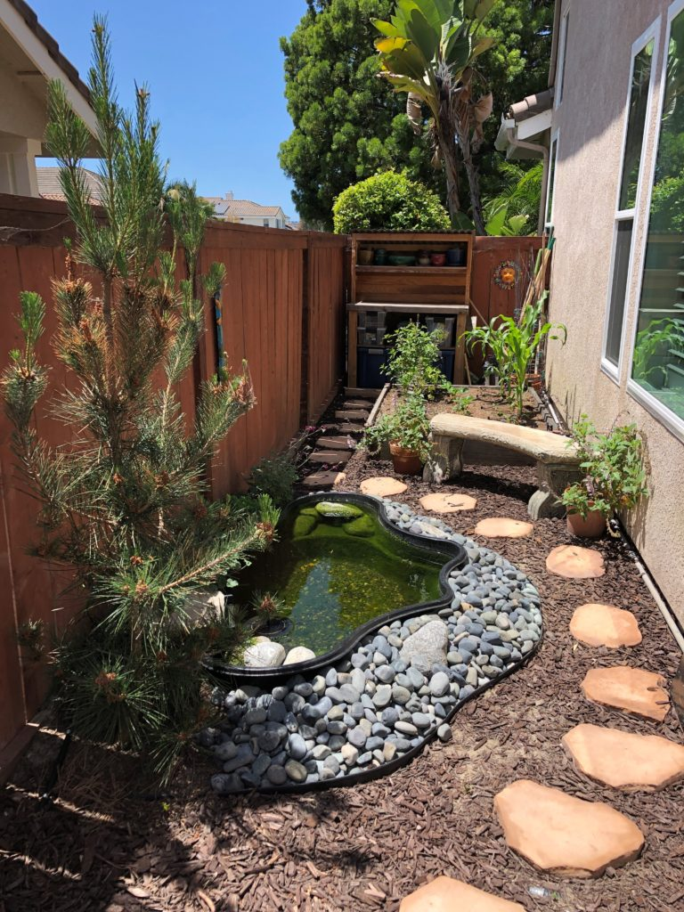 Beautiful Pond in Tight Spaces