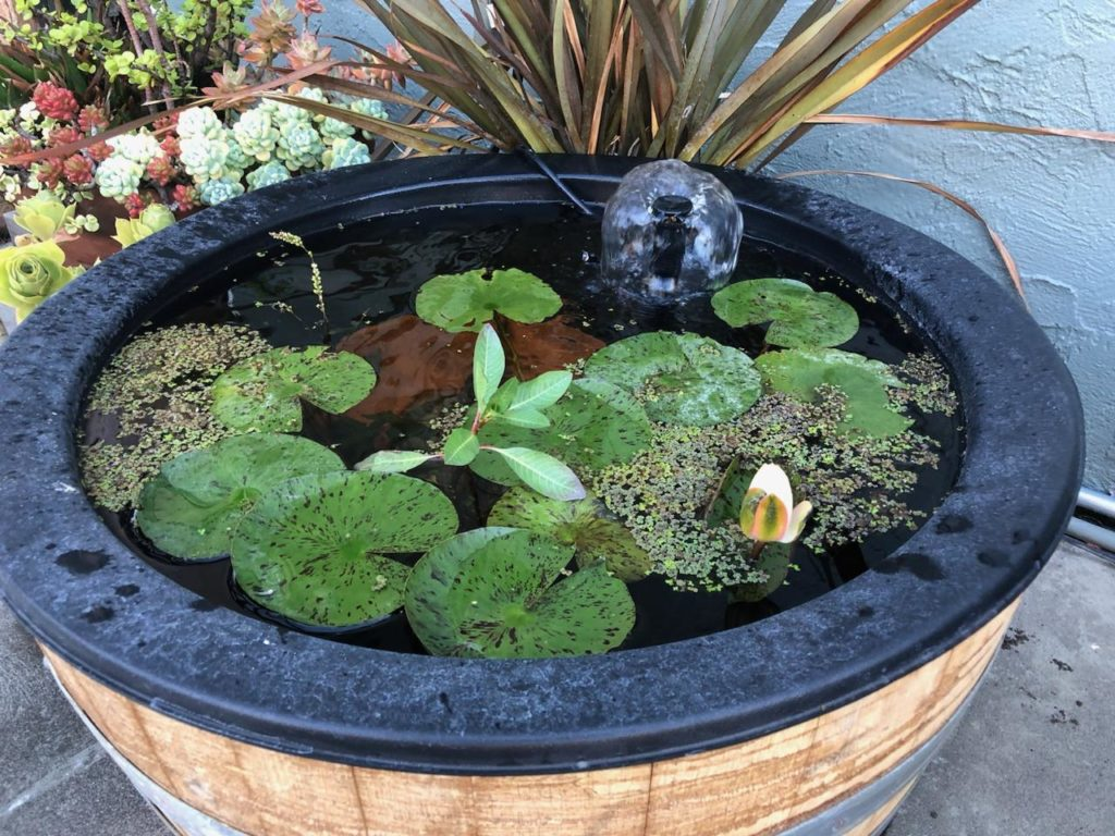 Water Garden in a Barrel